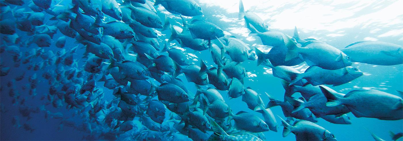Catfish in aquaculture system