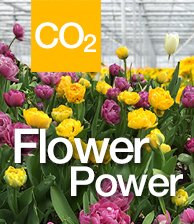 CO2 Flower Power thumbnail image